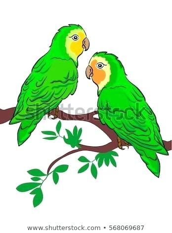 348x470 Parrots Drawings Easy To Draw Parrot Best Parrots Images