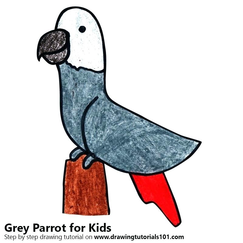800x800 Drawing Of Parrot For Kids