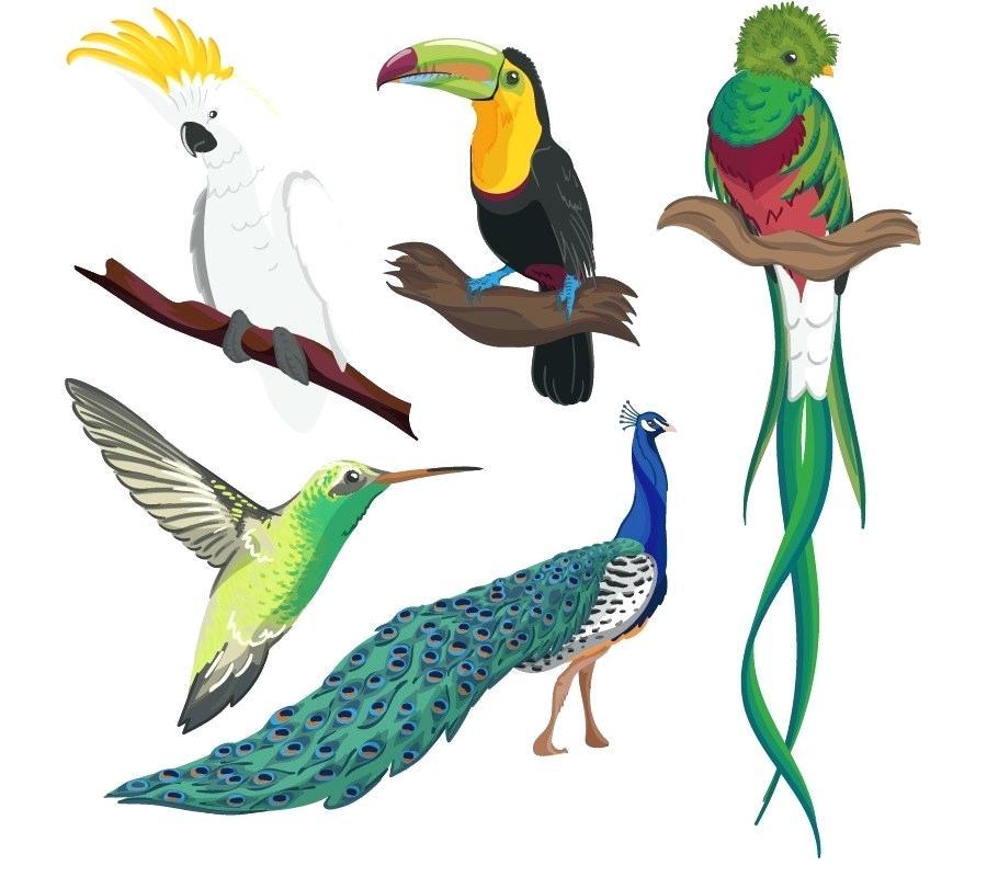 900x800 Bird Drawing Cartoon Hummingbird Parrot Drawing Cartoon Tropical