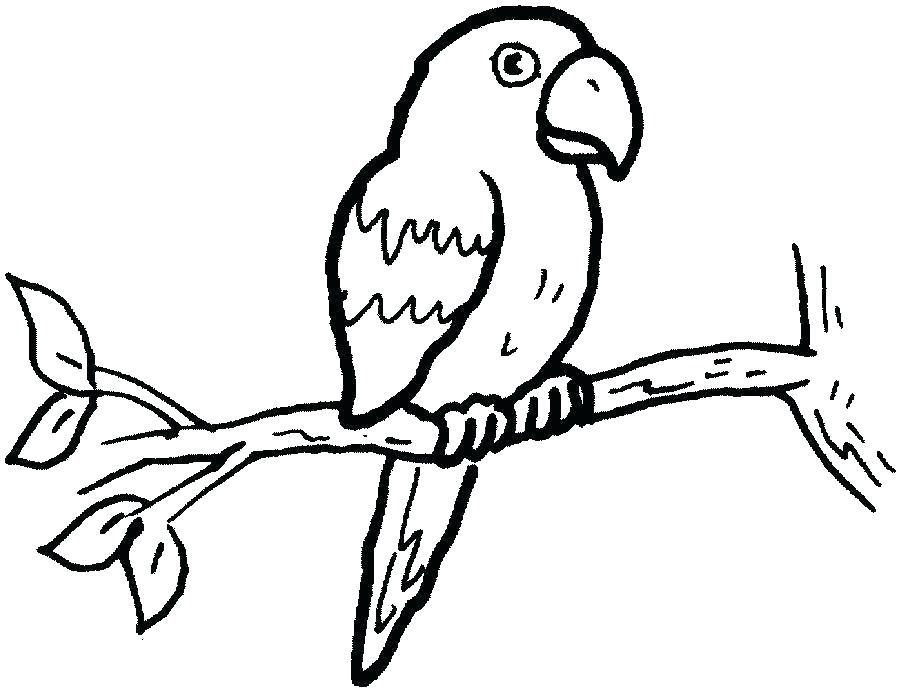 900x691 easy to draw parrot easy parrot drawing parrot drawing how draw