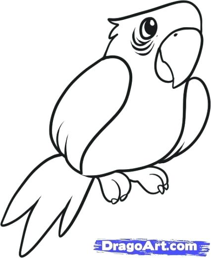 426x520 drawing of a parrot drawing a parrot step drawing parrot easy