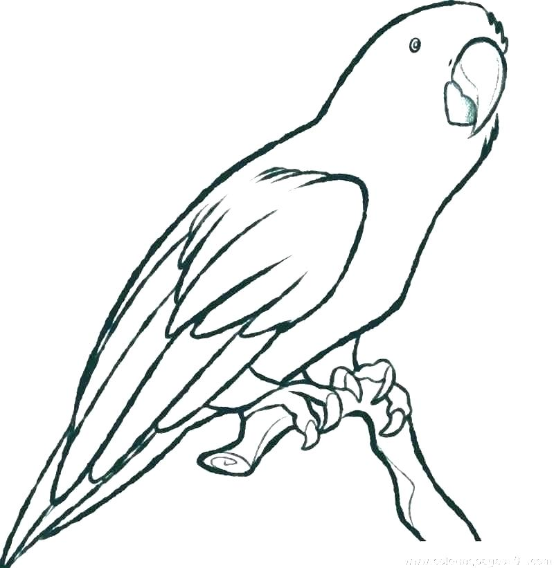 800x821 Macaw Coloring Pages Flying Parrot Colouring Pages Macaw Coloring