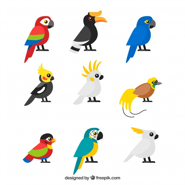 626x626 Parrot Vectors, Photos And Free Download