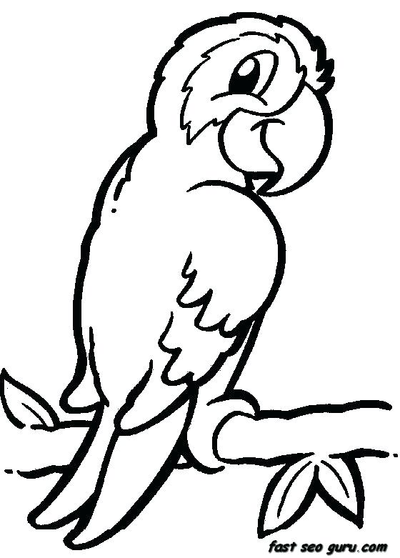 560x781 Parrot Drawings For Kids
