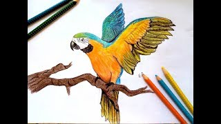 320x180 All Clip Of Parrot Drawing With Colour