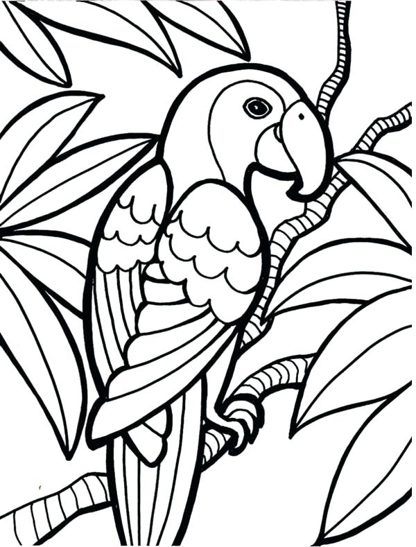 600x789 Coloring Pages Parrot Color It Coloring Pages Of Parrot Flying