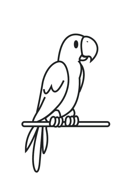 531x750 parrot drawing for colouring flying parrot coloring pages parrot