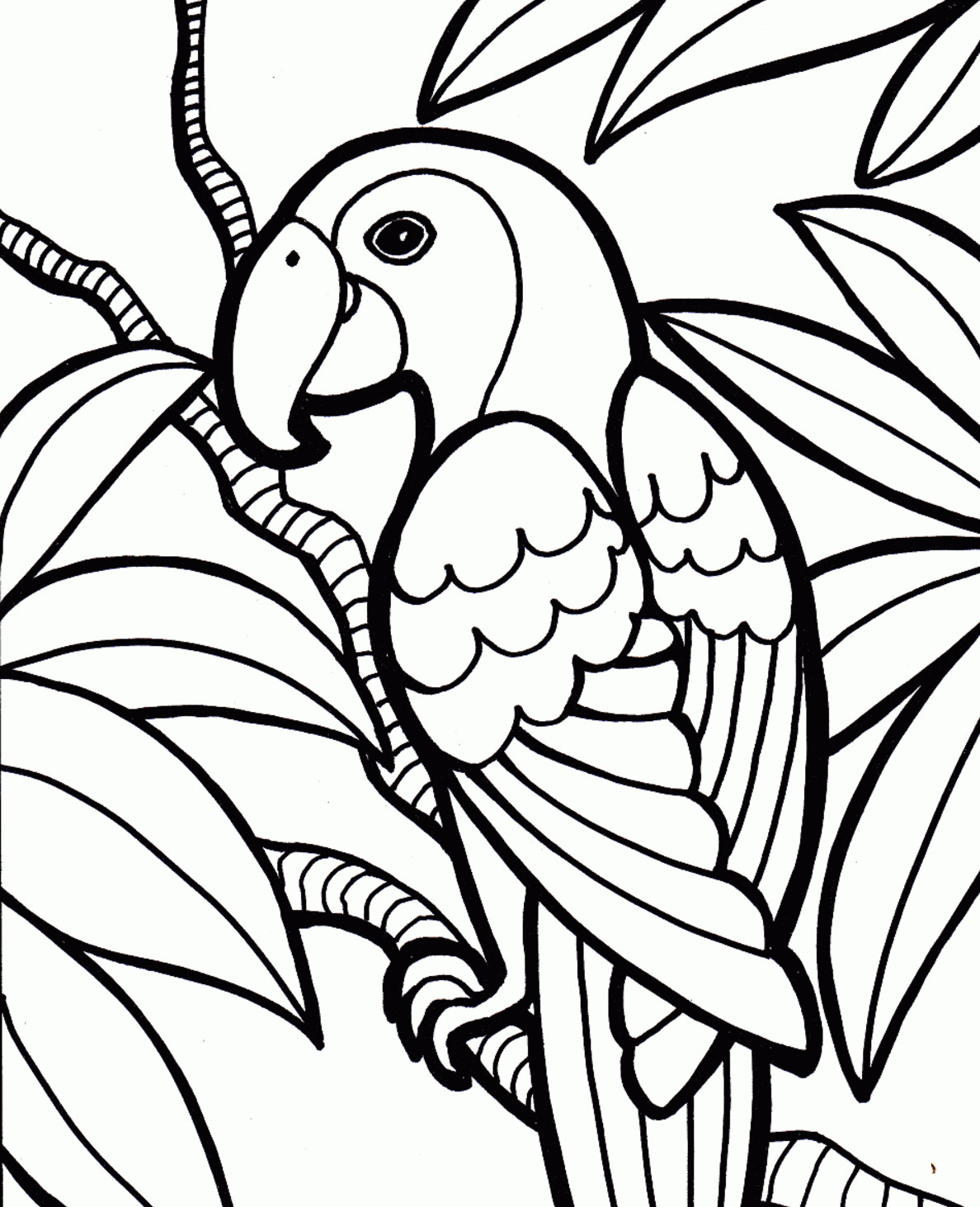 Parrot Pencil Drawing