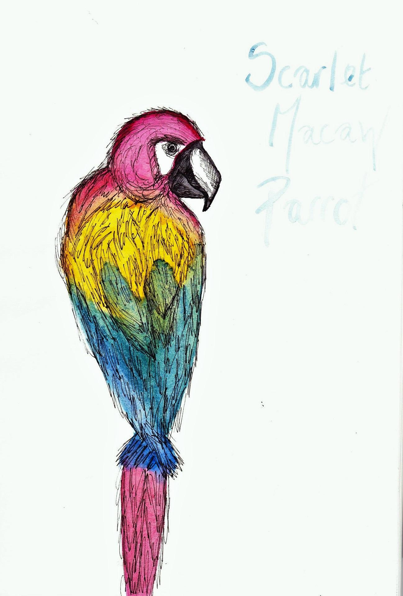 1298x1918 Bird Sketches Heidi Westmorland