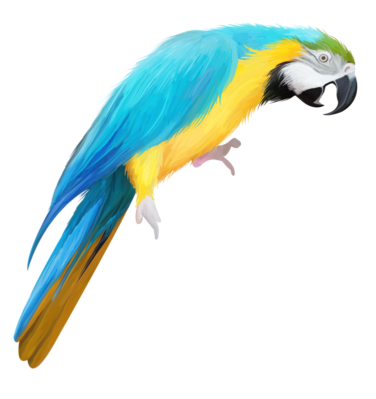 753x800 Collection Of Free Parrot Drawing Color Pencil Download On Ui Ex