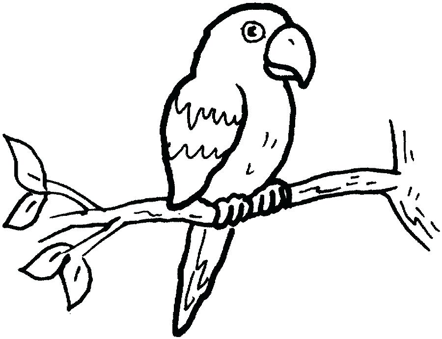 900x691 drawing parrot pencil drawing parrot on old paper vintage paper