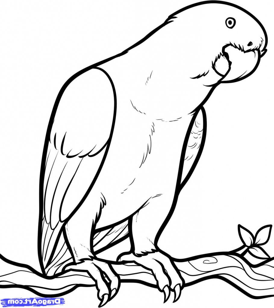 910x1024 Drawing Picture Of Parrot Drawn Parrot