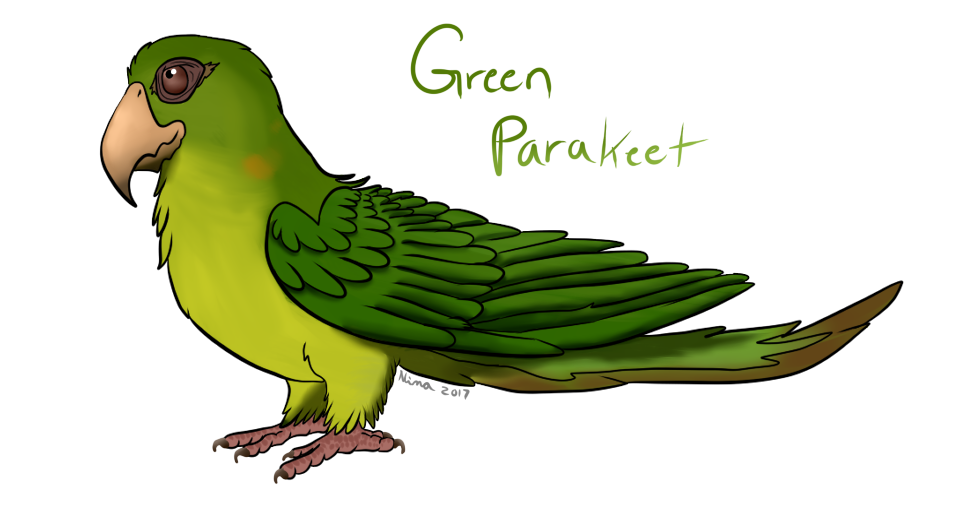 961x508 Parrots Drawing Side View Huge Freebie! Download For Powerpoint