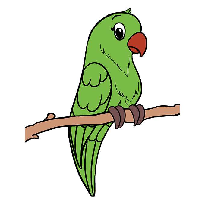 680x678 Huge Collection Of 'parrot Drawing' Download More Than Images
