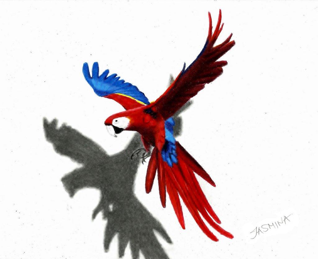 1024x834 Parrot Colour Pencil Drawing