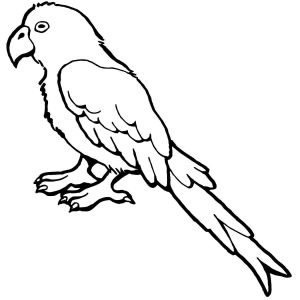 300x300 Parrot Drawing Best Parrot Drawing Outline At Getdrawings