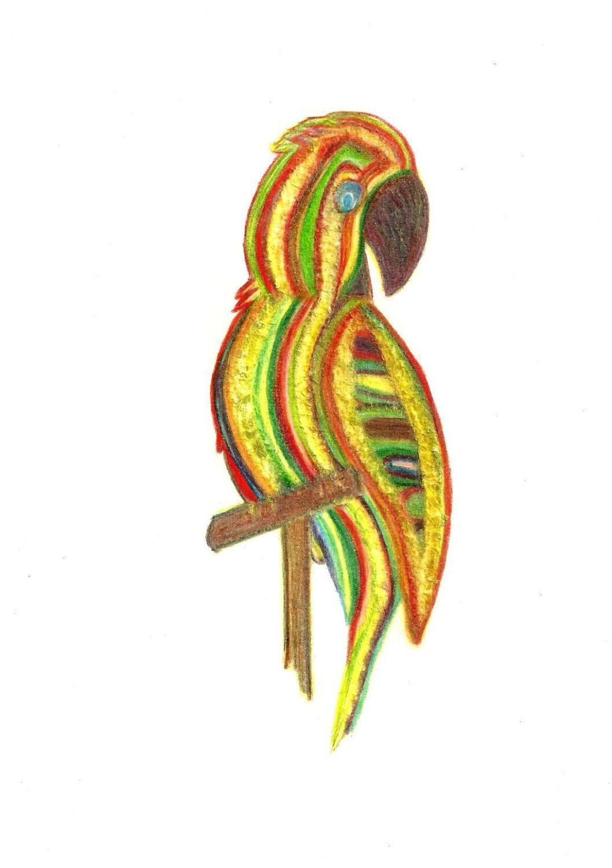 1057x1500 Parrot Of Caribbean Original Tri Color Pencil Drawing