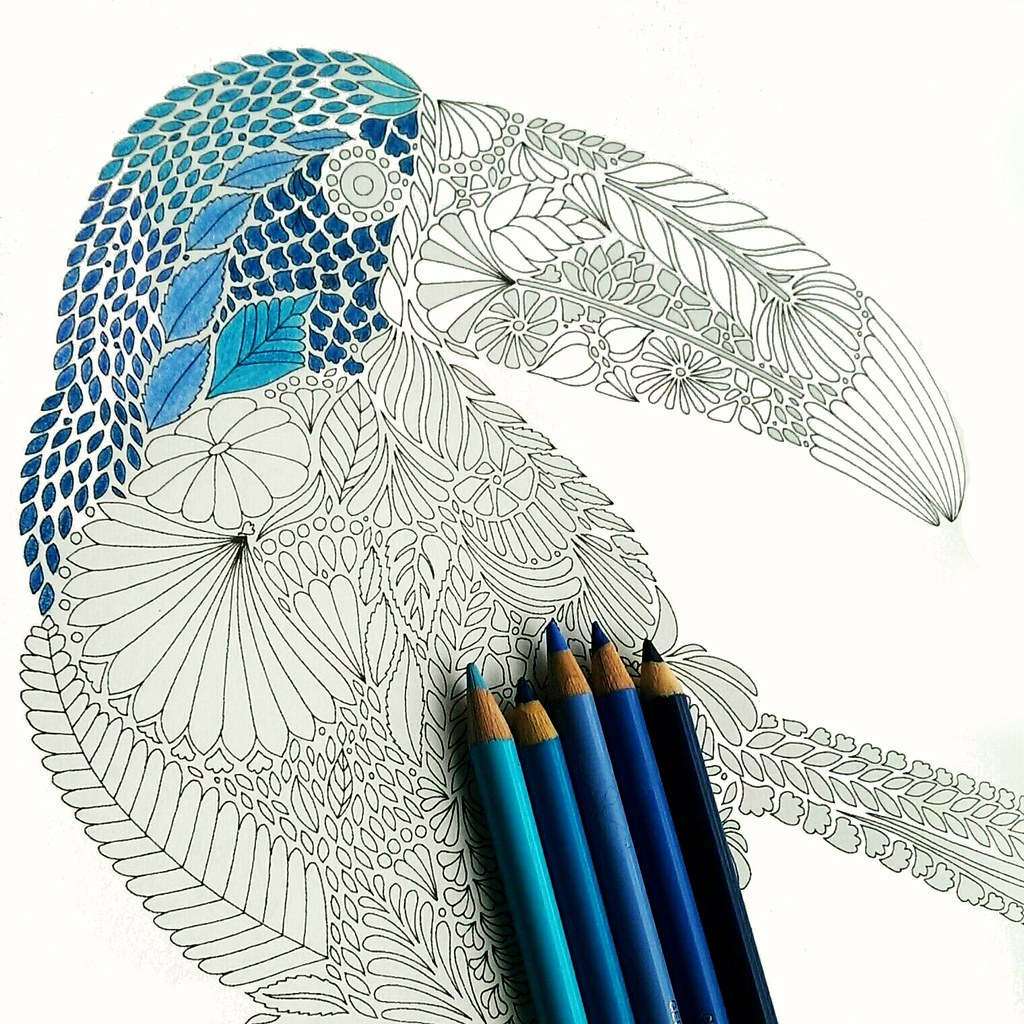 1024x1024 The World's Best Photos Of Parrot And Pencil