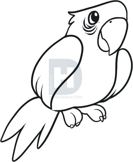 458x558 Drawing Parrot