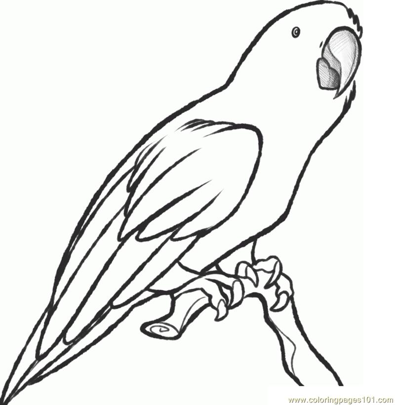 800x821 Parrot Drawing Color Pencil For Free Download