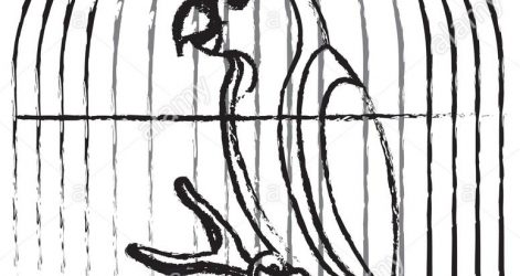 471x250 Bird In A Birdcage Drawing Broken Cage Pencil Parrot Tumblr