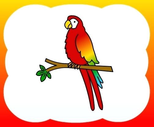 503x415 drawing parrot how to draw parrot for kids draw parrot step step