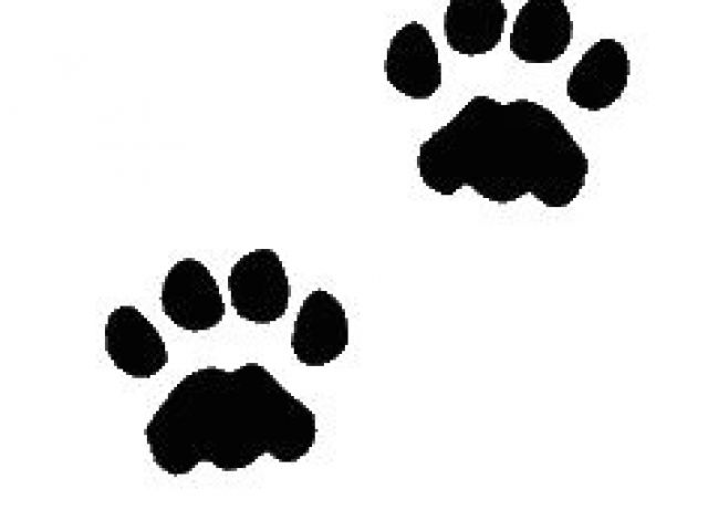 640x480 Drawing Of A Dog Paw Print Best Tattoo Paws Feet Images Dog Paw