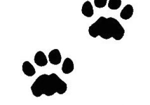 300x210 Drawing Of A Dog Paw Print Paw Print Games Drawings Dog Paws
