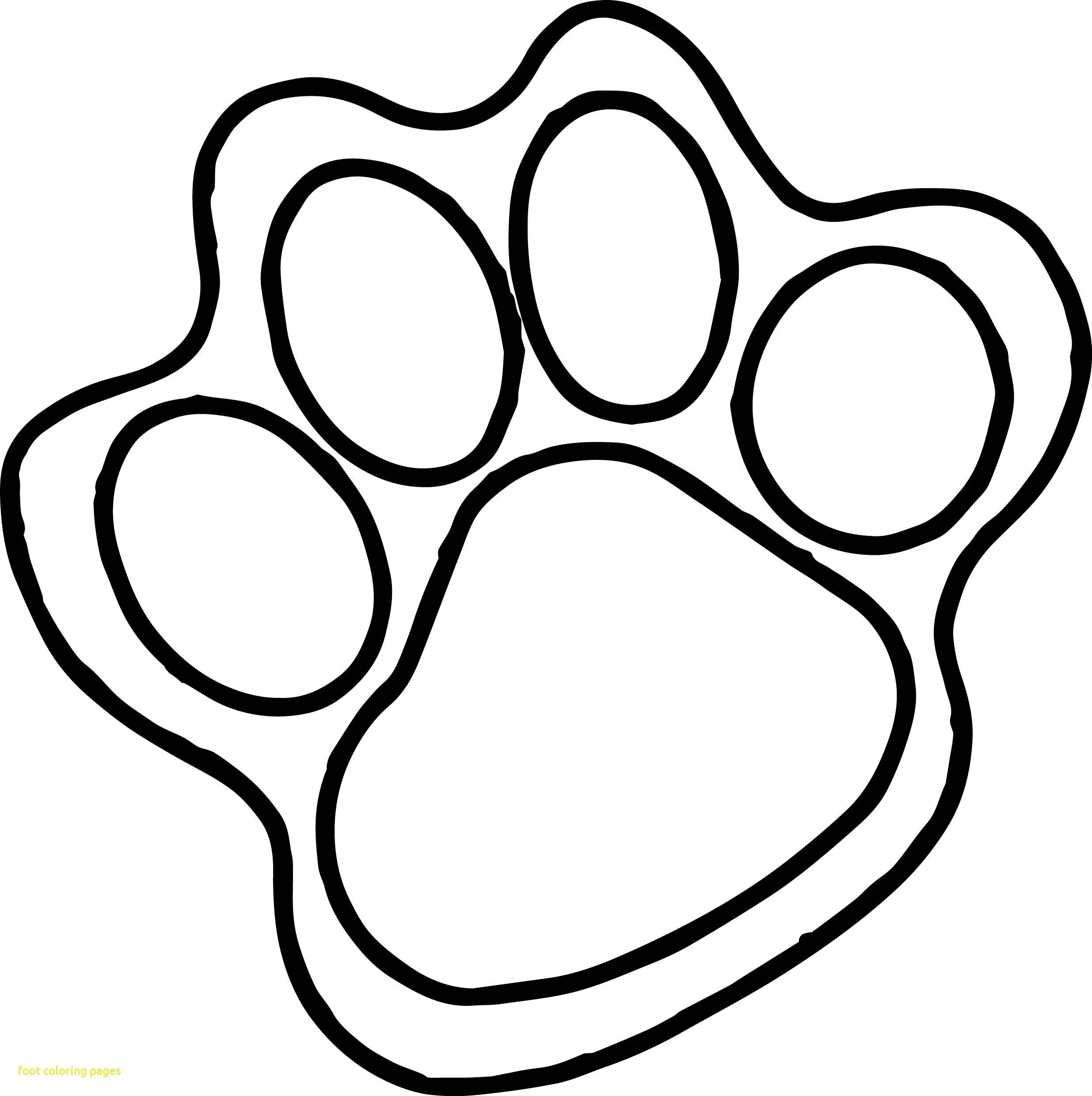 2471x2481 Bear Paw Print Drawing At Getdrawings