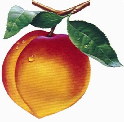400x395 How To Draw A Peach References Drawing Now How To Draw A Bowl