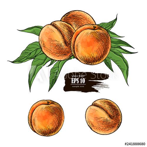 500x500 Peach Drawing