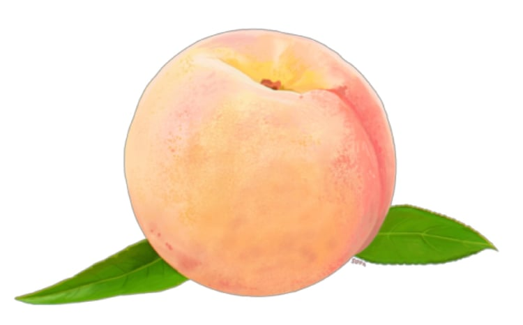 750x466 Peach Drawing Png Uploaded