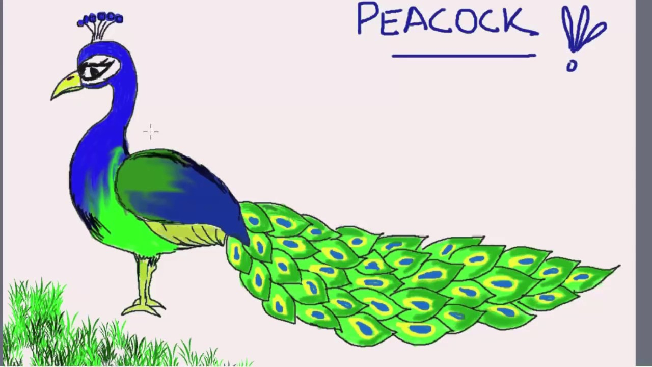 Peacock Pencil Drawing | Free download on ClipArtMag