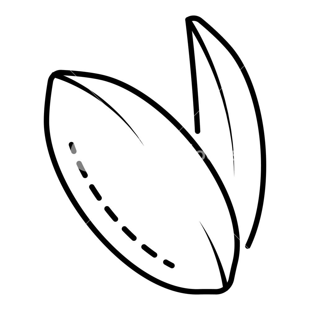 1000x1000 Peanut Icon Outline Peanut Vector Icon For Web Design Isolated