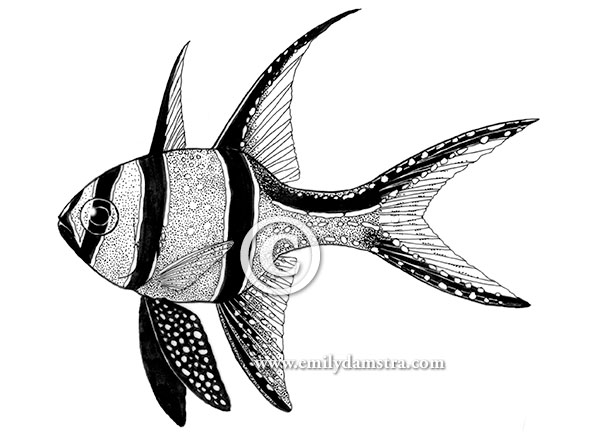 600x432 From A Decade Ago Pen And Ink Aquarium Illustrations Emily S