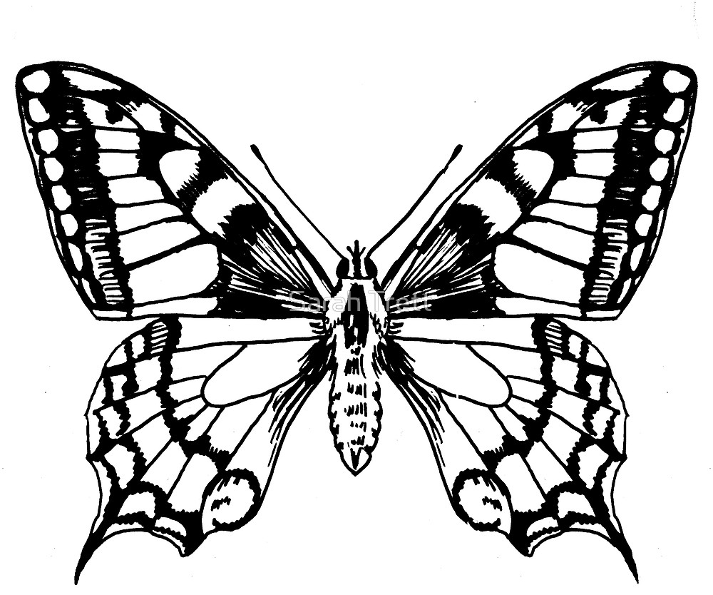 1000x834 Swallowtail Butterfly Ink Pen Drawing