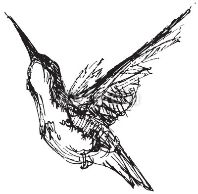 400x392 Vector Illustration Of A Hummingbird In Pen And Ink Style Buy