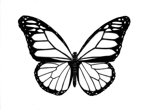 497x365 Black And White Butterfly Pen And Ink Drawing Print