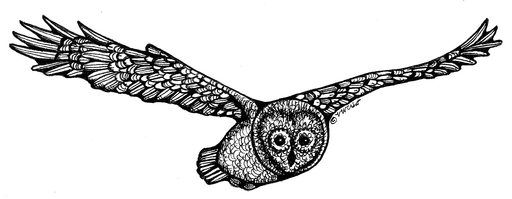2083x810 Northern Barred Owl Whimsical Words