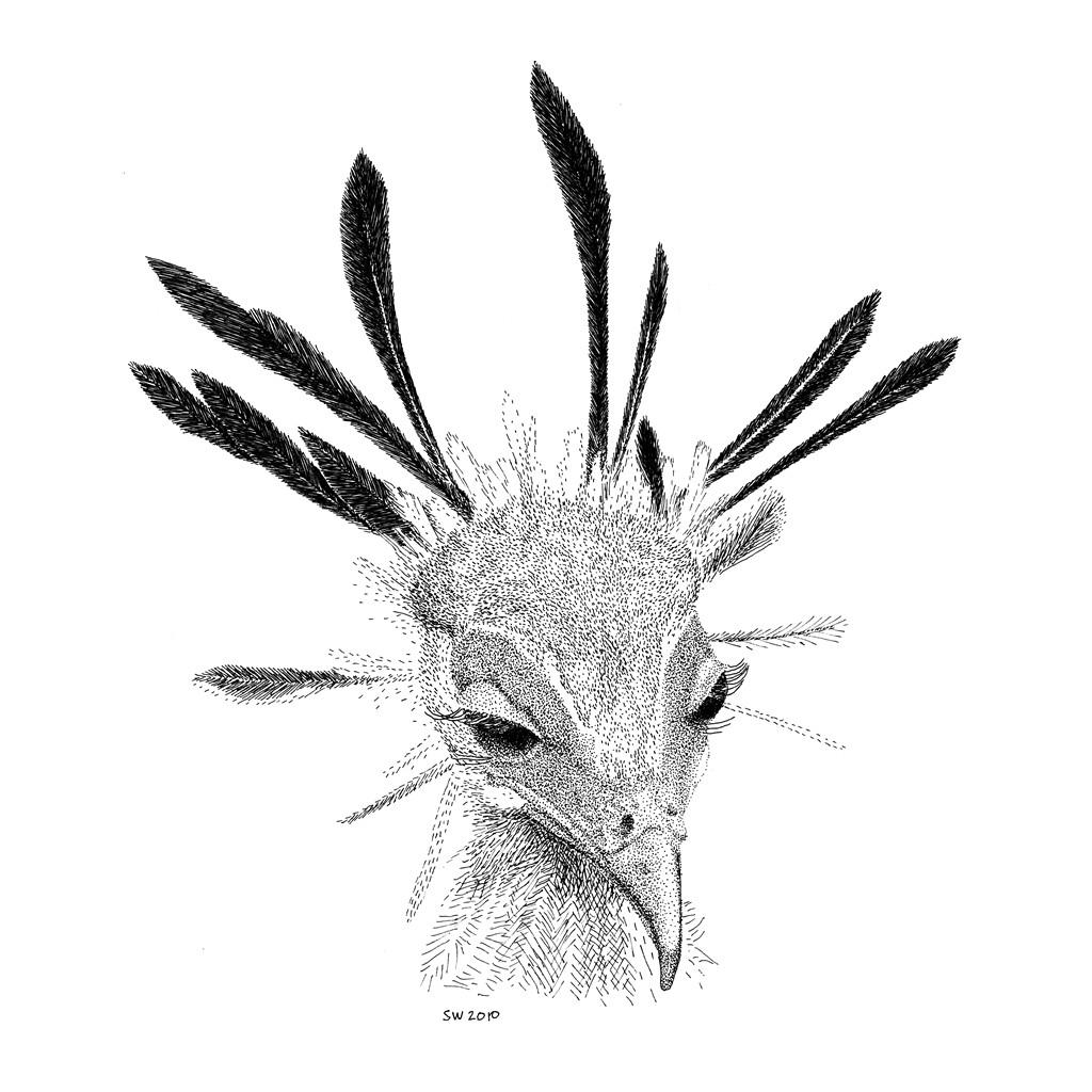 1024x1024 Scott Woyak Pen And Ink Drawings
