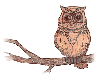 400x300 The Forest Owl