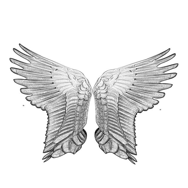 640x640 wings wings drawing angel wings drawing t