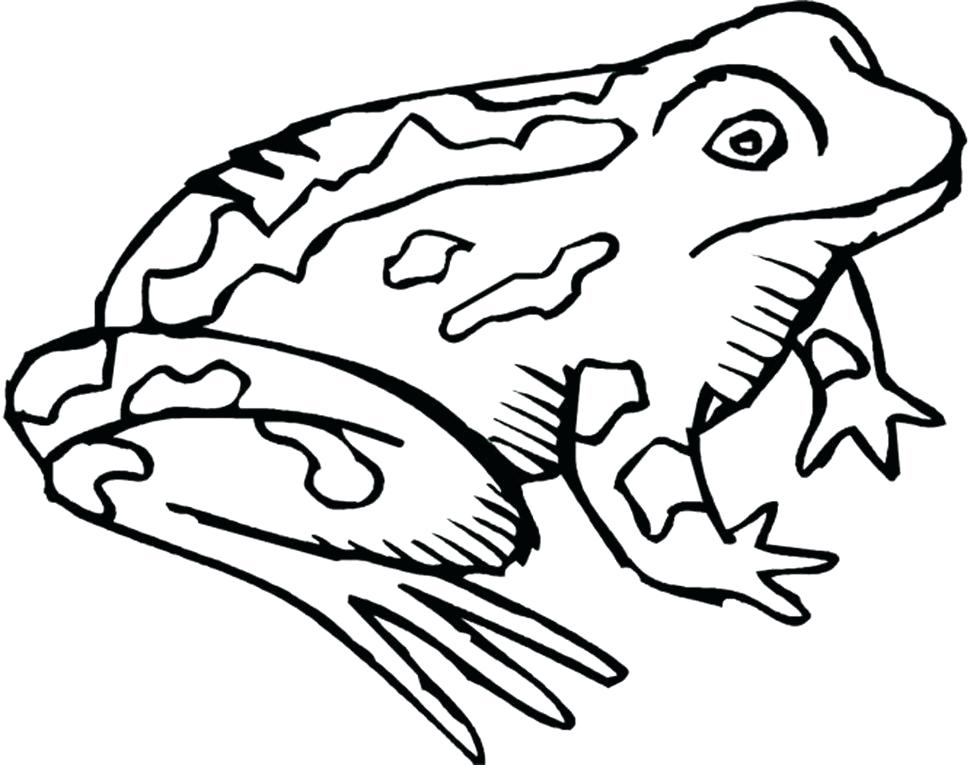 970x765 toad sketch share toad sketch drawing