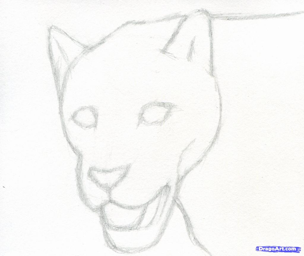 1024x864 How To Draw Animals Step