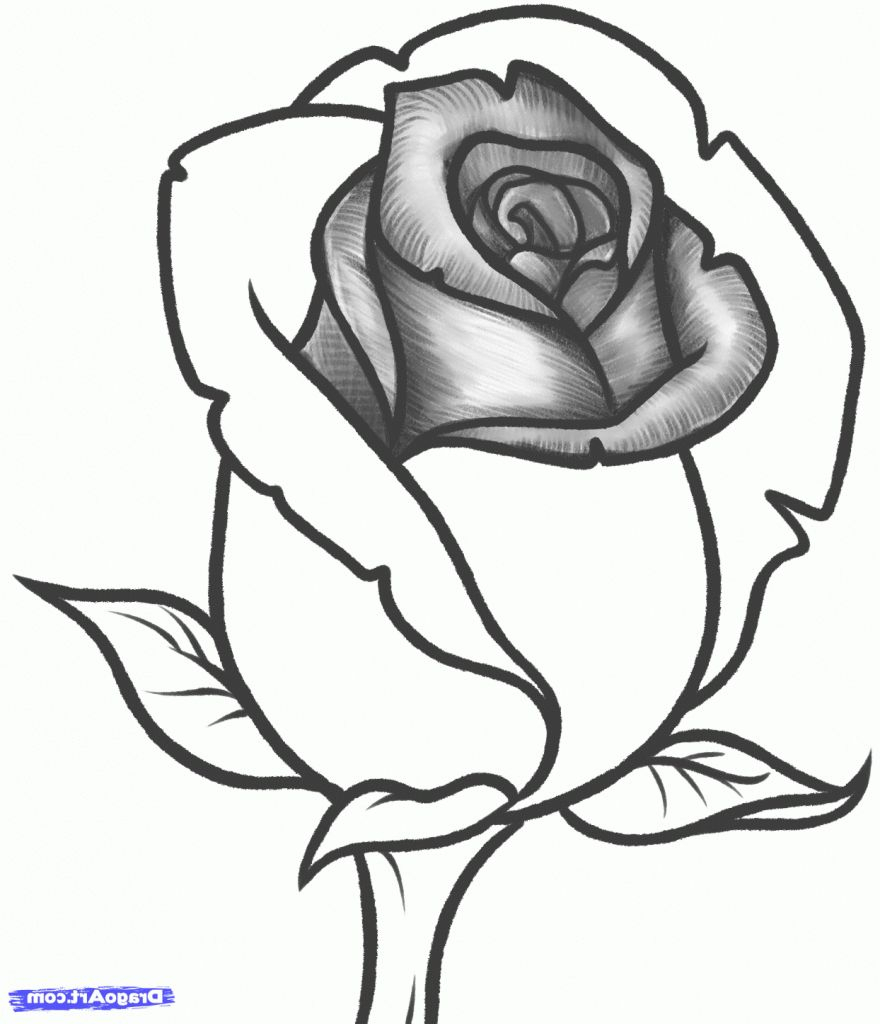 880x1024 Pencil Sketch Drawing Of Roses Rose Drawing Picture Rose Flower