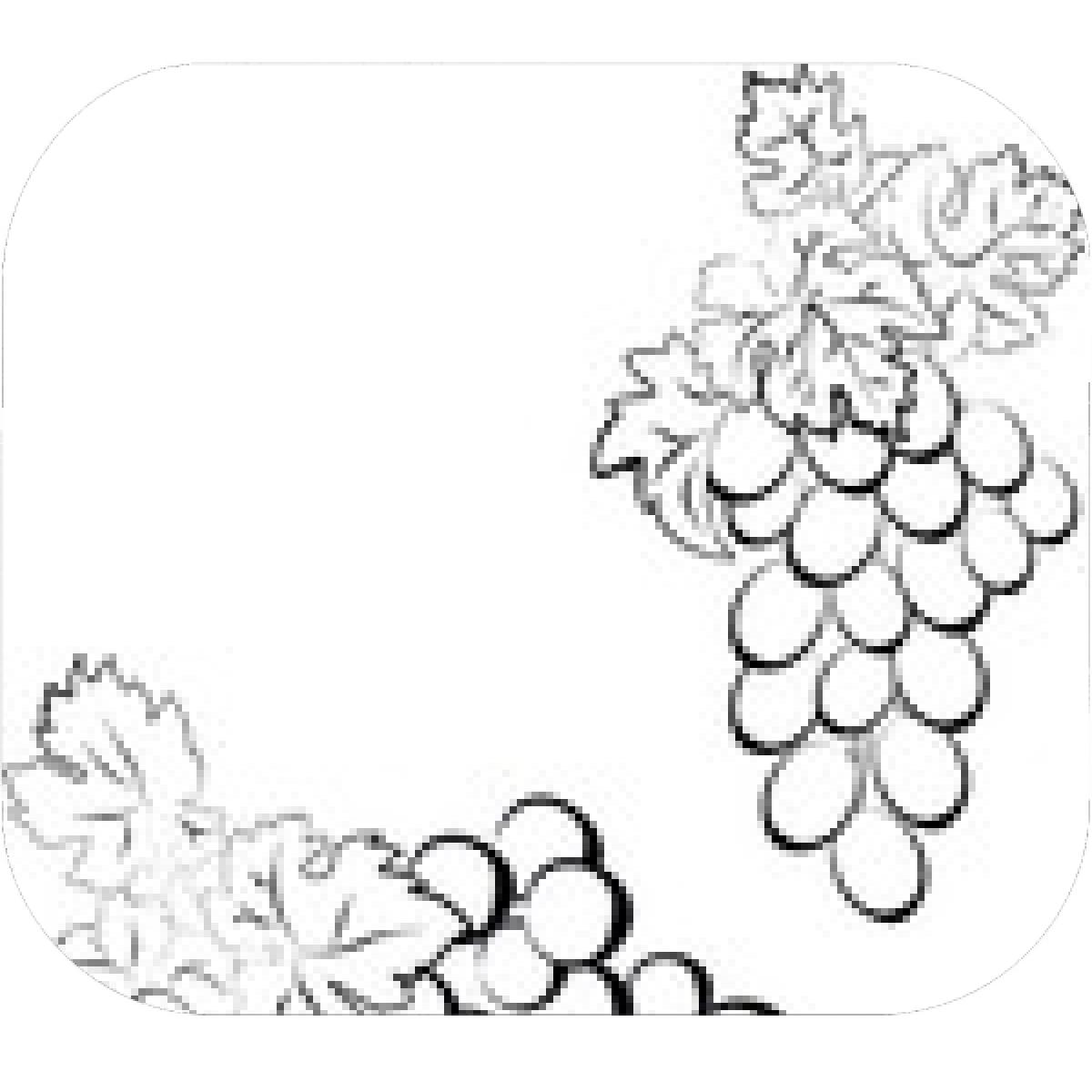 Pencil drawing grapes free download best pencil drawing grapes on