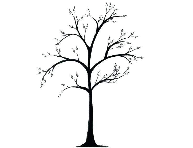 736x567 simple trees drawing tree draw tree trunk simple drawing of a tree
