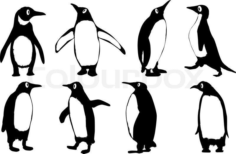 800x522 penguin outlines animals penguin cartoon, penguin outline