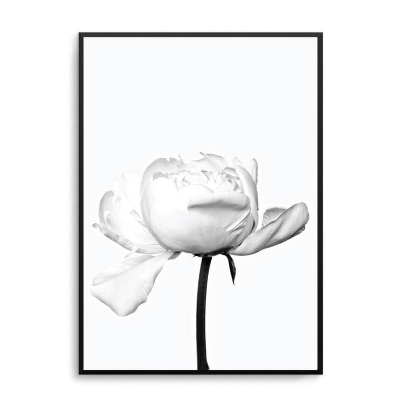 794x794 white peony print white peonies art poster scandi print poster etsy