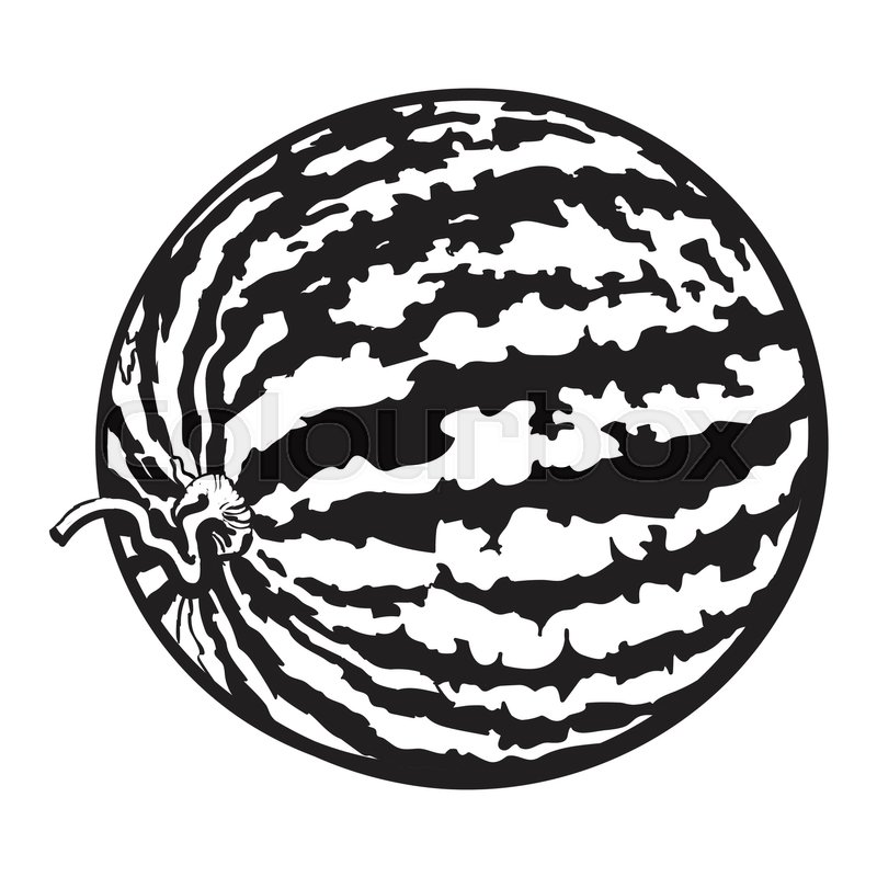 800x800 Perfect Whole Striped Watermelon With Stock Vector Colourbox